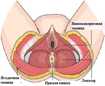 Пластические операции в гинекологии. Гинекология